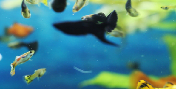 VideoHive The Fish 7 5563274
