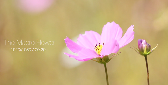 VideoHive The Macro Flower 2 5565211