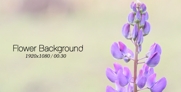 VideoHive Flower Background 5565510