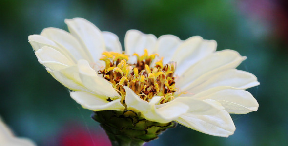 VideoHive The Macro Flower 5 5565625