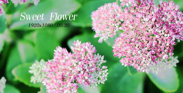 VideoHive Sweet Flowers 5565895