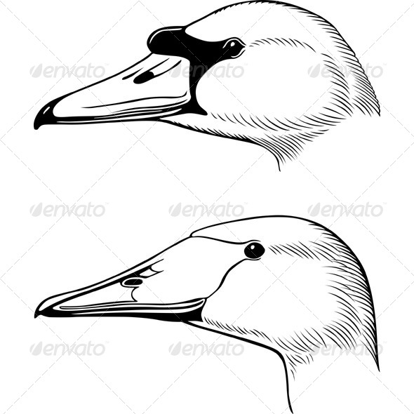 GraphicRiver Swan s Heads 5565954