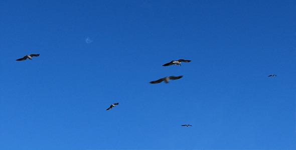 VideoHive Birds In The Sky 5569898