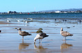 Birds feeding on Beach - PhotoDune Item for Sale