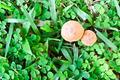 Mushroom Top View - PhotoDune Item for Sale