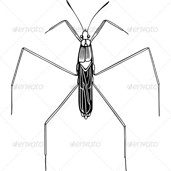 GraphicRiver Common Water Strider 5576663