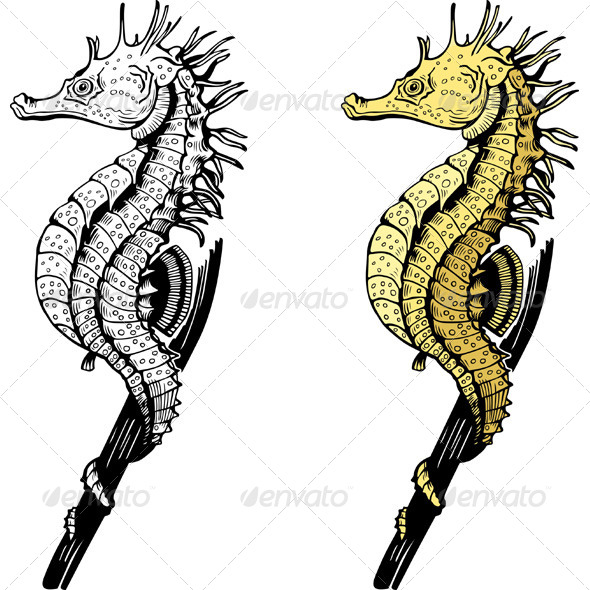 GraphicRiver Seahorses 5576764