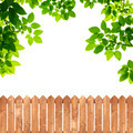 Green leaves with wood fence on white background - PhotoDune Item for Sale