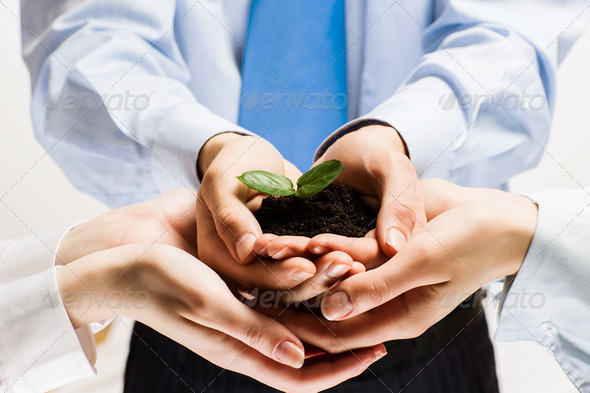 Sprout in hands - Stock Photo - Images