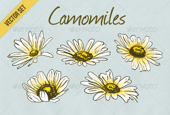 GraphicRiver Set of Hand Drawn Camomile Flowers 5586209