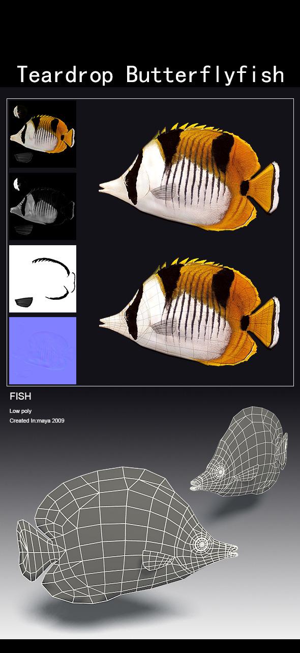 3DOcean Teardrop Butterflyfish 5618753