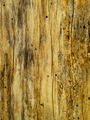 Old tree bark - PhotoDune Item for Sale