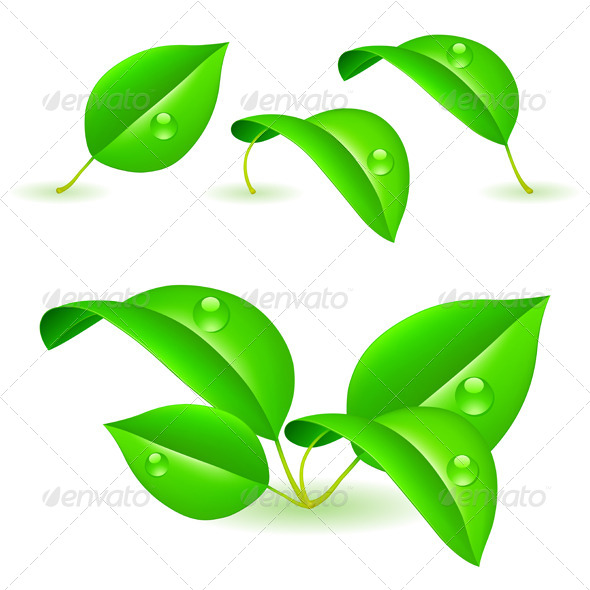 GraphicRiver Fresh Green Leaves 5636686