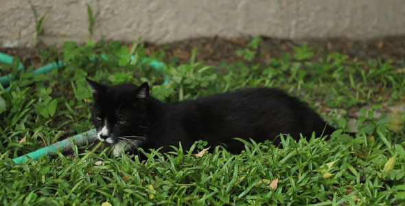 Download Cat Relaxing In Yard nulled download