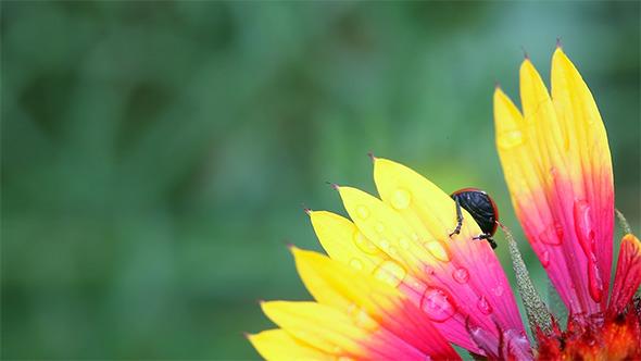 Curious Beetle