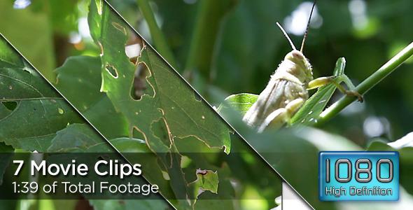Grasshoppers Ravage Plants