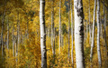 Golden Forest Between the Trees - PhotoDune Item for Sale