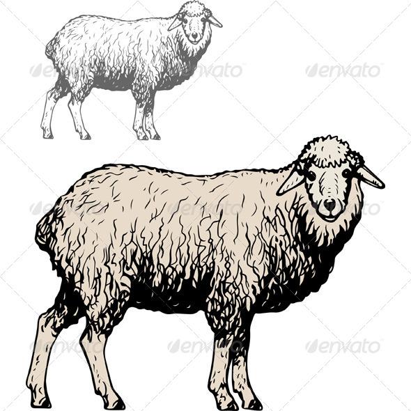 GraphicRiver Domestic Sheep 5641116