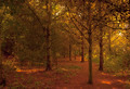 Autumn Trees - PhotoDune Item for Sale