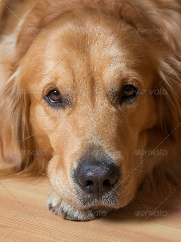 Portrait dog - Stock Photo - Images