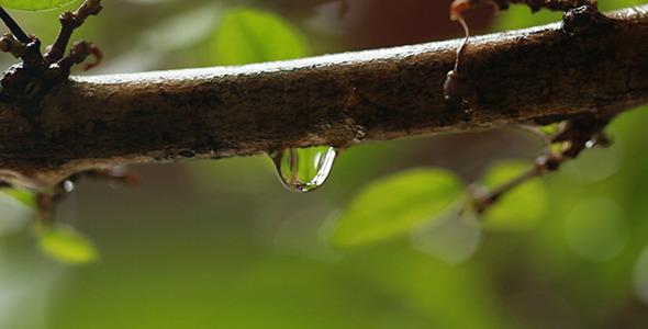 Rain Drop Dripping 3