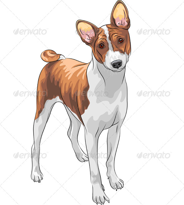 GraphicRiver Vector Sketch Hunting Dog Basenji Breed 5680507