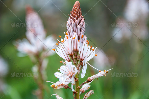 Exotic white flower blossoming - Stock Photo - Images