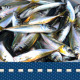 Fishing - VideoHive Item for Sale