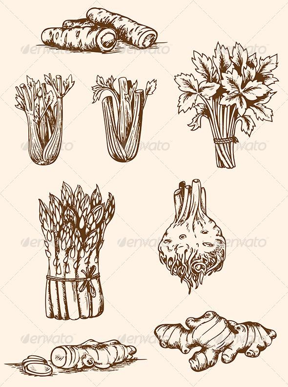 GraphicRiver Vintage Vegetables 5710647
