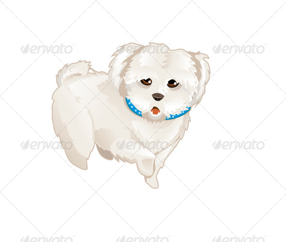 GraphicRiver Poodle 5727449