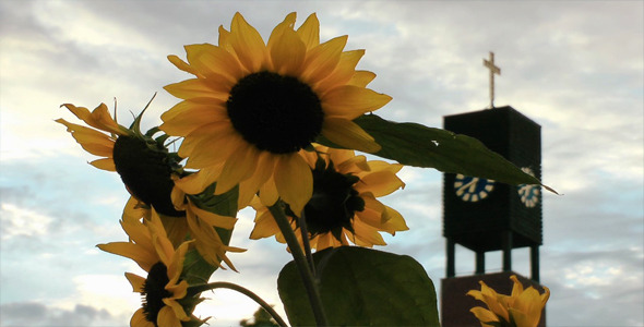 Sunflower and the Church