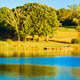 Early Autumn - In the Nature - VideoHive Item for Sale
