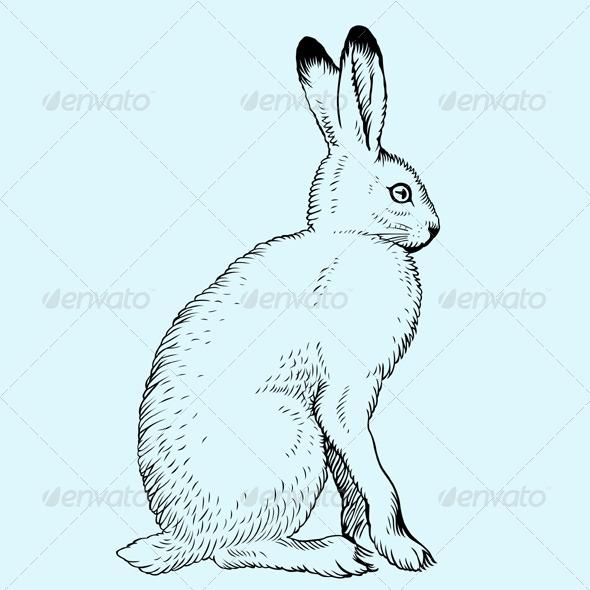 GraphicRiver Hare 5739437