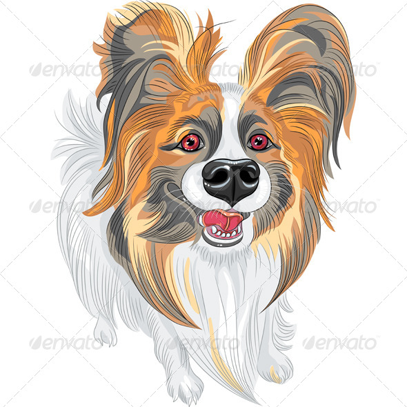 Papillon Breed of Dog - Animals Characters