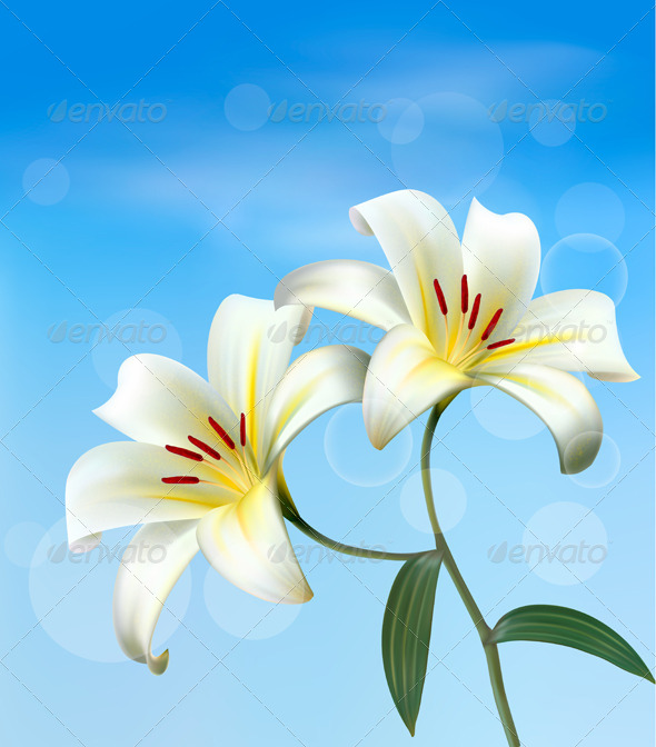 Holiday Background with Two White Lilies