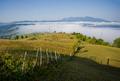 fresh landscape - PhotoDune Item for Sale