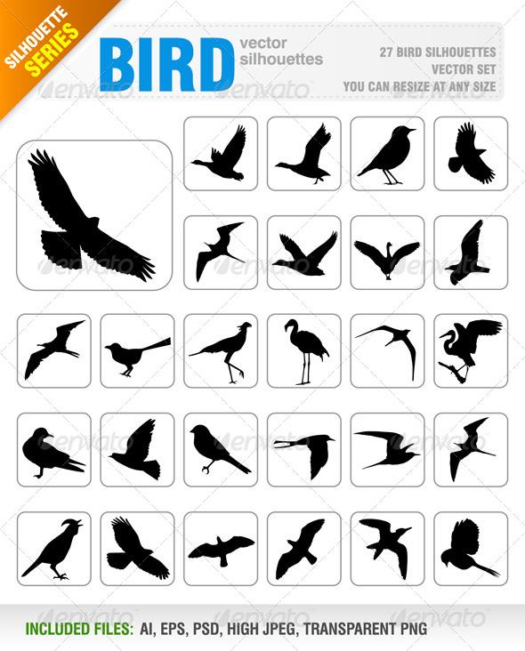 GraphicRiver Birds 5756199