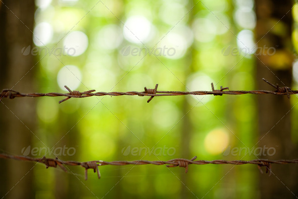 Rusty barb wire - Stock Photo - Images