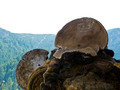 Wood mushrooms 1 - PhotoDune Item for Sale