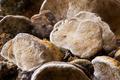 Wood mushrooms 4 - PhotoDune Item for Sale