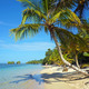 Leaning coconut tree on beach - PhotoDune Item for Sale