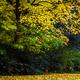 Vintage Autumn Nature - VideoHive Item for Sale