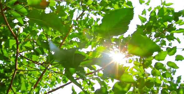 Sunlight Through The Leaves 6