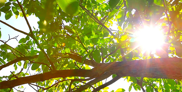 Sunlight Through The Leaves 8