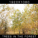 Trees In The Forest 3 - VideoHive Item for Sale