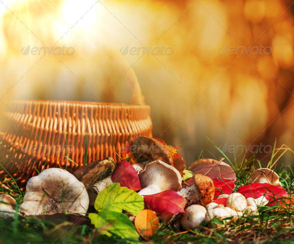 Mushroom - Stock Photo - Images