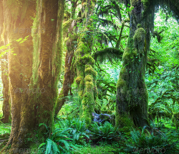 Green forest - Stock Photo - Images