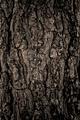 Tree texture - PhotoDune Item for Sale
