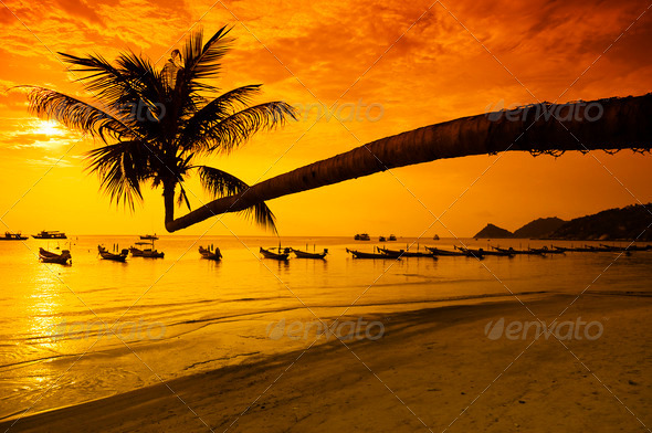 PhotoDune Sunset with palm and boats on tropical beach 609151
