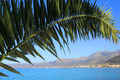 green palm against the blue sky and sea - PhotoDune Item for Sale